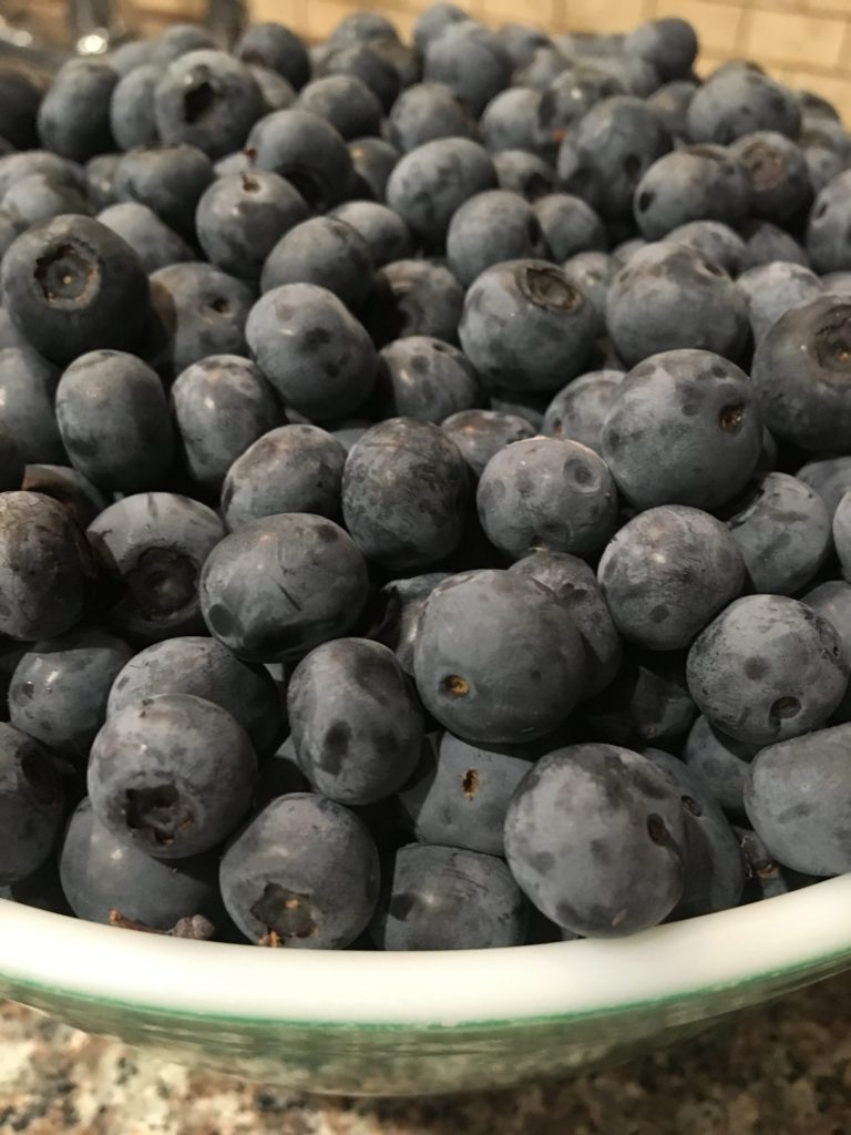Blueberries picked at Leavelle Farms